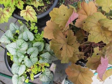 Summer-bbq-plants